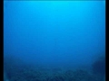 Video from a dive in Cala Rossa - San Vito Lo Capo - Sicily - Italy